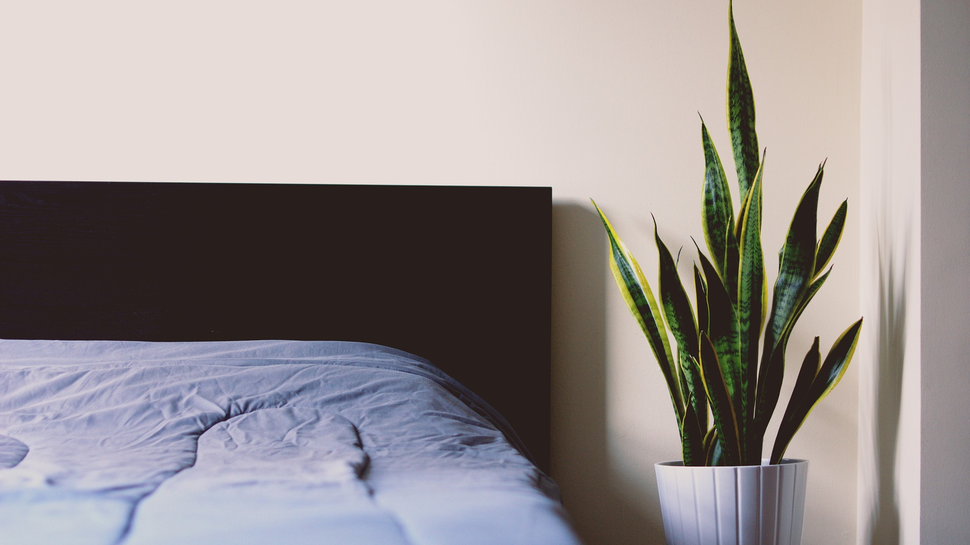 Tener Plantas En Tu Habitación Te Ayudará A Dormir Mejor.