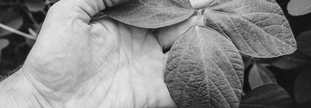 Viscoélastique de soja naturel non-OGM